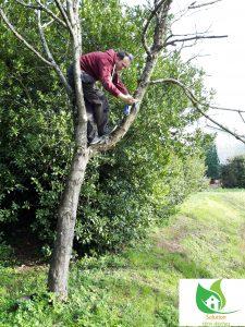 un petit peu d'escalade pour retirer un chiffon humide d'un arbre le samedi 2 mars 2019